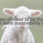 Why we all need to be thinking about lamb survivability? (1/3)